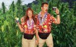 Say no to canna-tourism (Press Democrat)